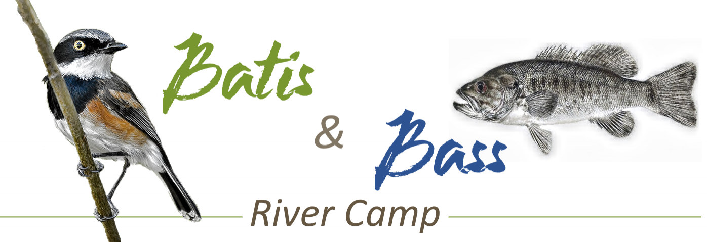 Batis and Bass River Camp
